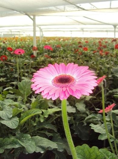 El MIPrA en Flores